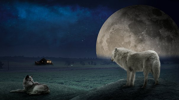 Wolf, Moon, Night Sky, Cabin, Hut, Field, Meadow, Farm
