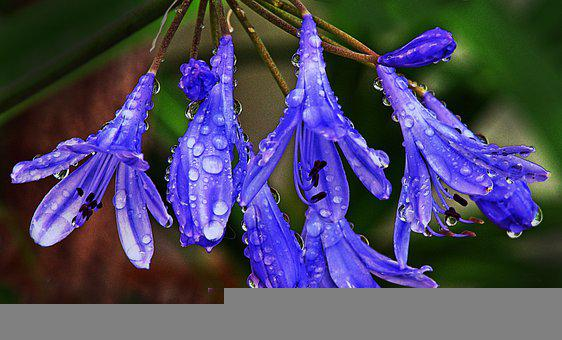 Flower, Blossom, Bloom, Petals, Raindrop, Drip