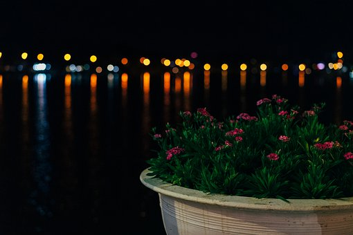 Flowerpot, Flowers, Leaves, Plants, Lake, Night, Pot