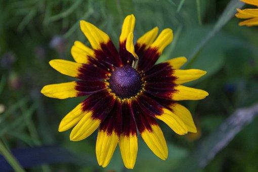 Flower, Plant, Bloom, Nature, Blossom, Garden, Floral