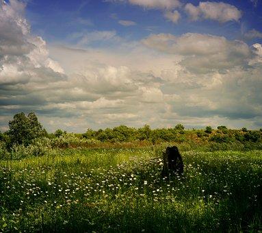 Field, Flowers, Forest, Trees, Plants, Evening, Stump