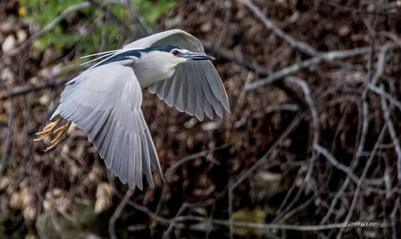 Bird, Bihor, Beak, Plumage, Feathers, Avian, Tree