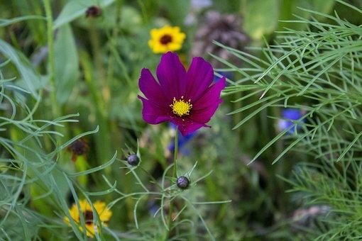 Green, Flowers, Garden, Summer, Nature