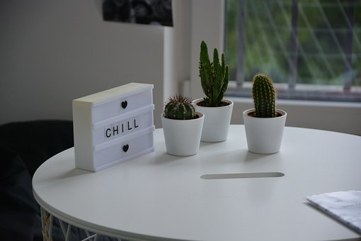 Cactus, Room, Decoration, Potted Plant, Plant, Table