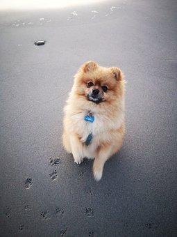 Dog, Pet, Domestic, Canine, Mammal, Animal
