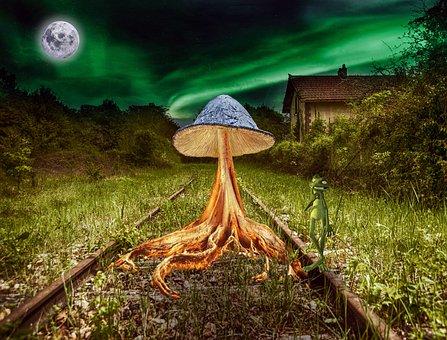 Fantasy, Mushroom, Train Tracks, Railway, Fungi