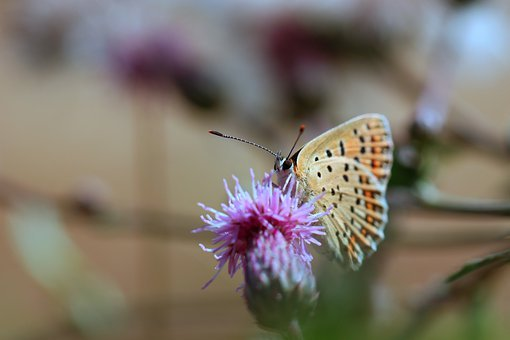 Butterfly, Flowers, Petals, Nature, Insect, Wings