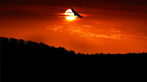 Sunset, Forest, Mountain, Sun, Orange, Bird, Nature