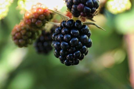 Fruit, Berries, Fruits, Sweet, Vitamins, Fresh