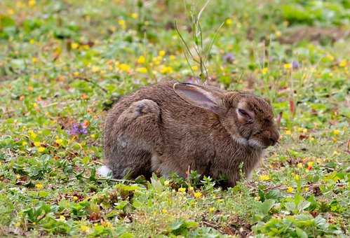 Bunny, Rabbit, Grass, Ears, Meadow, Wildlife, Nature