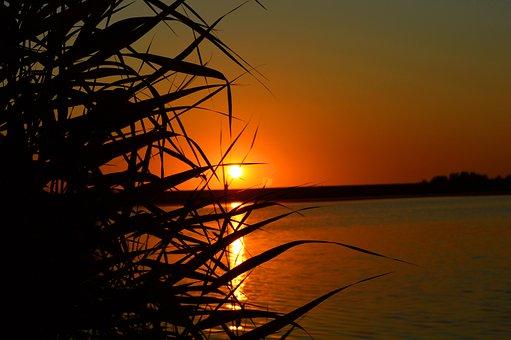 Sunset, Coast, Sea, Grass, Plants, Meldorfer Port
