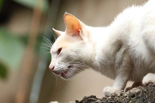 Cat, Outdoor, Nature, Kitty, Kitten, Animal, Cute, Pet