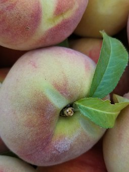 Peaches, Fruit, Summer, Harvest, Leaf, Stem, Pink