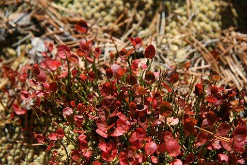 Plant, Nature, Blossom, Bloom, Landscape