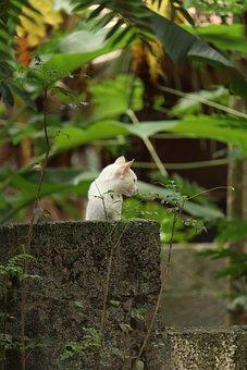 Cat, Nature, Kitty, Kitten, Animal, Pet, Outdoor