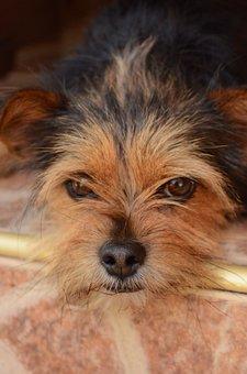 Dog, Face, Pet, Animal, Cute, Brown, Head, Sweet, Nose
