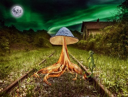 Mushroom, Train Tracks, Tree Roots, Moss, Moon, Frog