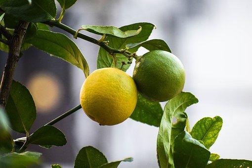 Lemons, Citrus Fruits, Lime, Citrus, Yellow, Fruit