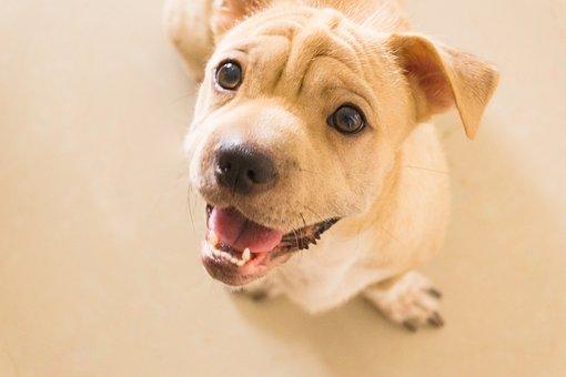 Puppies, Dog, Smiling, Cute, Love Animals, Pet