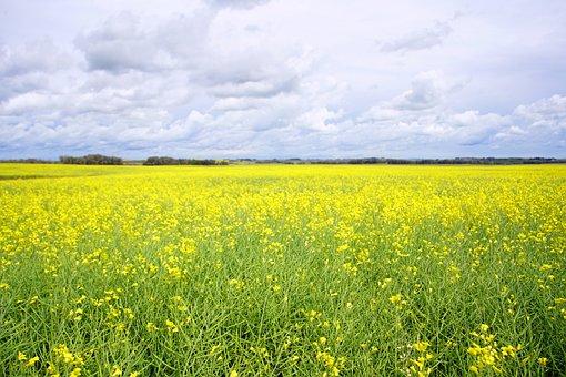 Field, Farm, Farmland, Agriculture, Landscape, Prairie