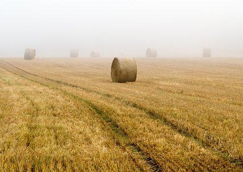 Straw Bales, Round Bales, Field, Cereals, Harvest, Fog