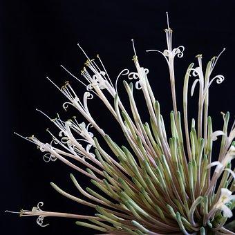 Flower, Flowering, Sukulent, Plant, Room, Large, Green