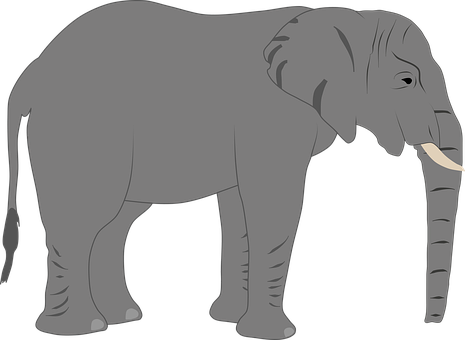 Elephant, Trunk, Africa, Nature, Animal, Mammal, Safari