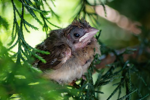 Bird, Beak, Plumage, Feathers, Tree, Branch, Cardinal