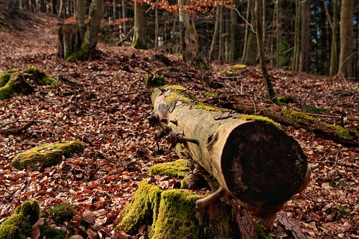 Forest, Tree, Wood, Stump, Log, Trunk, Magic