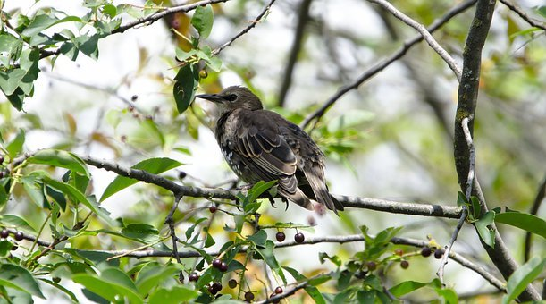 Star, Sparrow Bird, Nature, Animal World, Feather, Wing