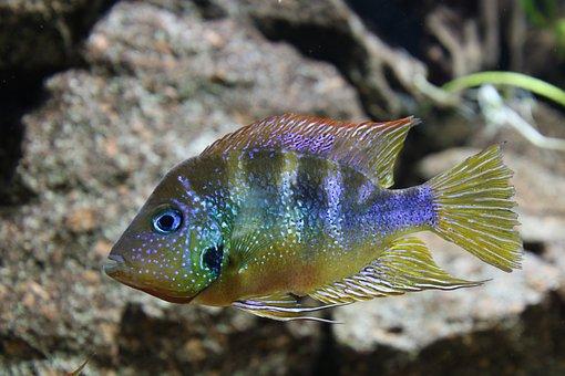 Fish, Aquarium, Leipzig, Swim, Animal, Underwater
