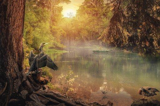 Bird, Cormorant, River, Morning, Dawn, Sunrise, Fog