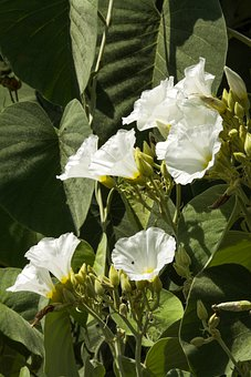 Flower, Petals, Stem, Plants, Buds, Nature, Bloom