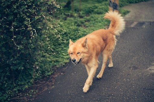 Dog, Pet, Domestic, Canine, Mammal, Animal, Puppy, Fur