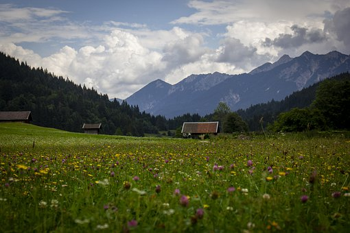 Mountains, Flowers, Forest, Trees, Field, Meadow, Alps
