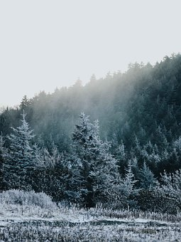 Snow, Forest, Fog, Nature, Winter, Landscape, Cold