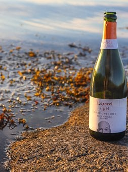 Bottle, Champagne, Sparkling, Lake, Leaves, Foliage