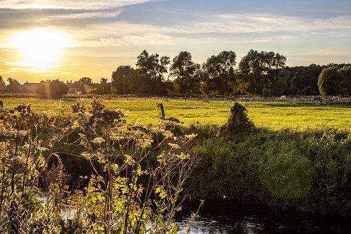 Field, Trees, Grass, Meadow, River, Sun, Abendstimmung