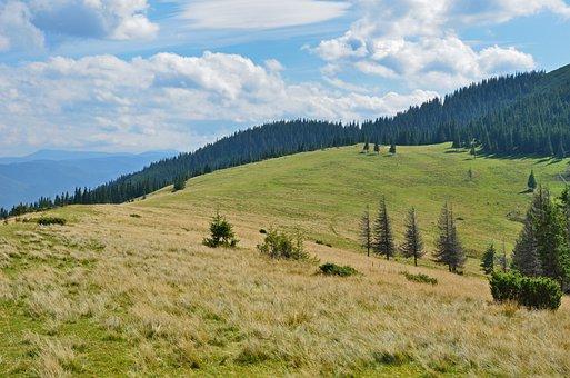 Mountain, Pasture, Slope, Tree, Evergreen, Coniferous