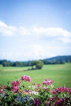 Flowers, Plants, Balcony, Meadow, Field, Grass, View