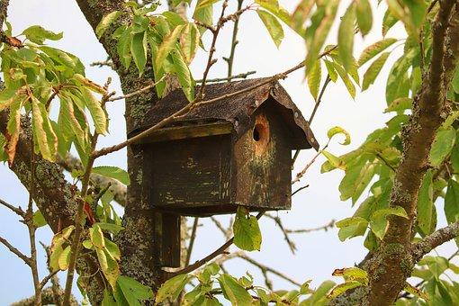 Bird Feeder, Aviary, Animal Welfare, Nesting Box