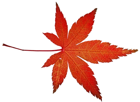 Leaf, Maple, Tree, Autumn, Fall, Colorful, Foliage
