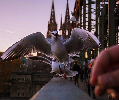 Seagull, Bird, Wings, Beak, Feathers, Bridge, Sunset