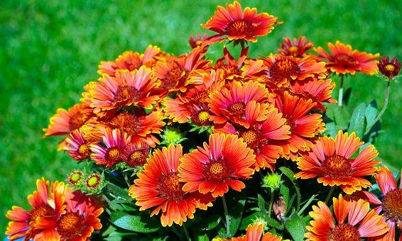 Flowers, Petals, Blossom, Bloom, Nature, Flora