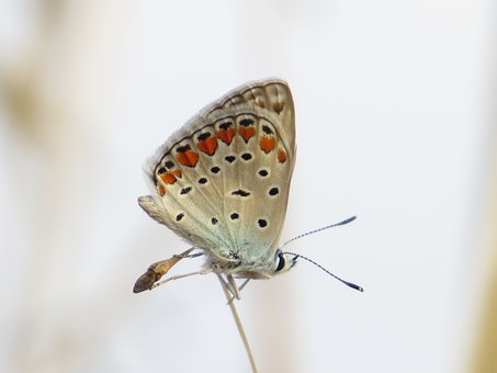 Butterfly, Insect, Bug, Antennae, Wings, Pattern