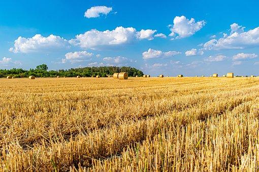 Straw Bales, Field, Cornfield, Summer, Low Angle Shot
