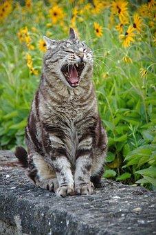 Cat, Feline, Kitty, Domestic, Cute, Ears, Fur, Tail