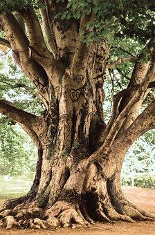 Tree, Old, Wood, Bark, Tribe, Texture