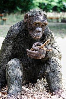 Ape, Gorilla, Nature, Primate, Animal, Sitting