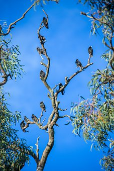 Birds, Starlings, Tree, Branches, Leaves, Foliage, Sky